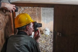 Greg Septon Takes Photo of Mother Peregrine